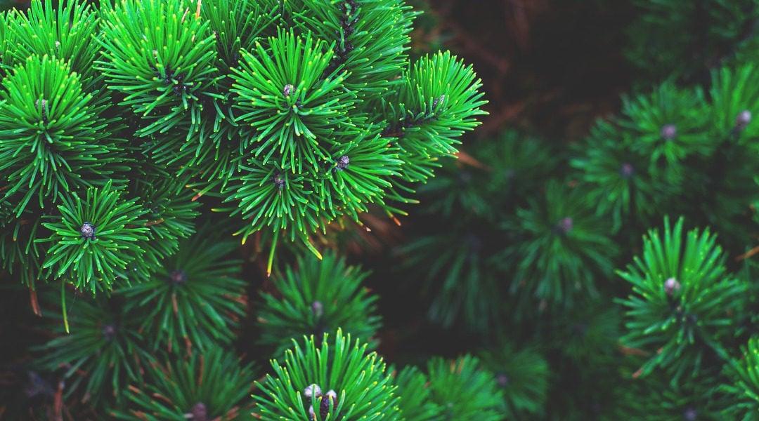 Cheviot Trees Nursery & Pentland Plant Trials visit