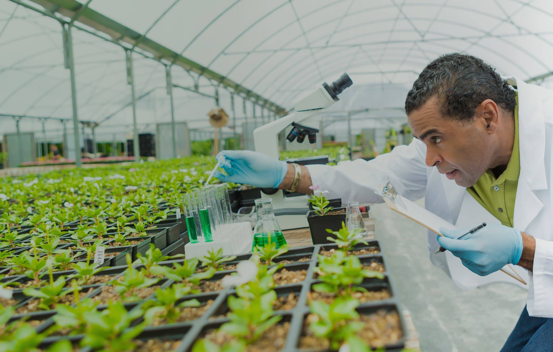 thesis in horticulture The ms degree consists of course work and original research, which is reported in a thesis the research is performed under the guidance of the major professor the study program, ie, the list of graduate courses to be taken, is developed under the guidance of the major professor and a committee of graduate faculty organized by the student.
