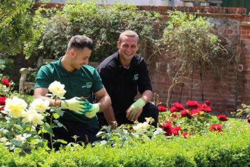 Two gardeners working in a rose bed