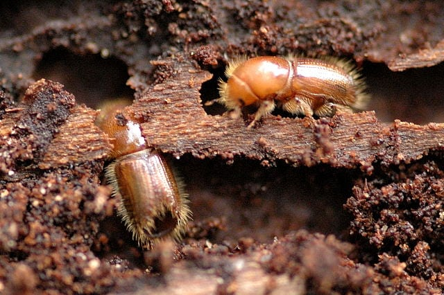Two new pests found in the UK