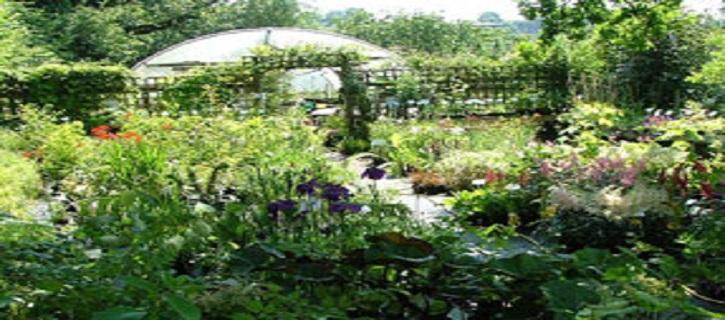 Bordervale Plants & Dryffryn Gardens