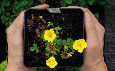 The Sibbaldia and PlantNetwork Conference – 22-23 April 2020