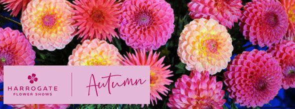 Harrogate Autumn Flower Show 2020