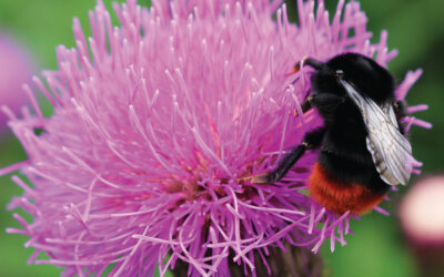 The Horticulturist – Vol. 29 No.2 – Summer 2020