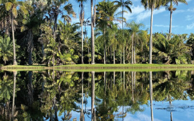 The Horticulturist – Vol. 29 No.3 – Autumn 2020