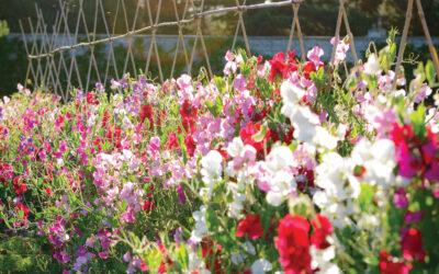 The Horticulturist – Vol. 30 No.2 – Summer 2021